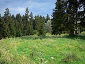 Landscapes of Jura - Meadow and spruces (trees), in the Upper Jura Regional Nature Park