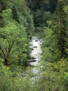 Landscapes of Jura - River lined with trees
