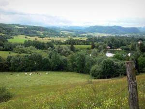 Landscapes of Jura - Wild flowers, meadows, trees, lake and hills in background