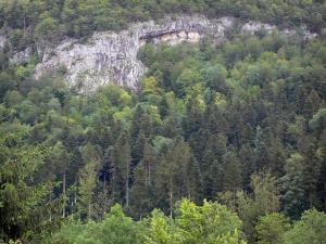 Landscapes of Jura - Forest (trees) and rock face