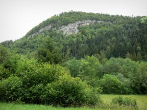 Landscapes of Jura - Shrubs, trees, spruces (forest) and rock face