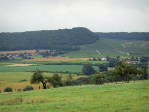 Landscapes of Jura - Meadows, fields, trees, houses, vineyards (Jura vineyards) and forest in background