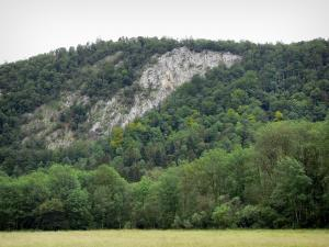 Landscapes of Jura - Field, trees (forest) and rock face