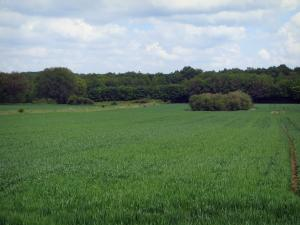 Landscapes of the Loir-et-Cher - Trees lining a field and clouds in the sky
