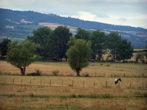 Landscapes of Loire - Meadows planted with trees and view of the Forez mountains