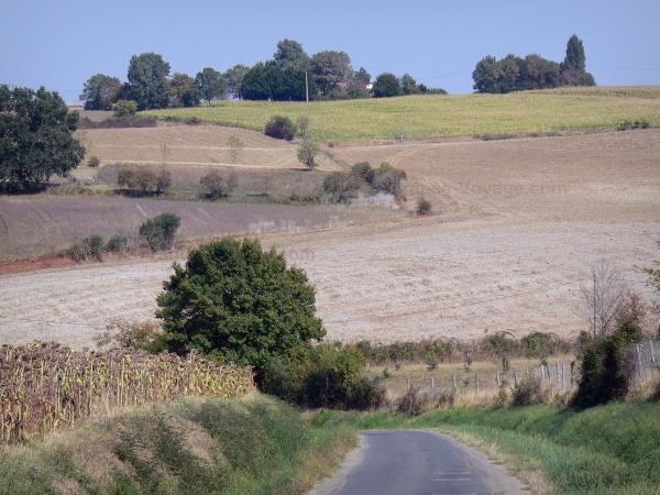 Landscapes of the Lot-et-Garonne - Small country road lined with fields
