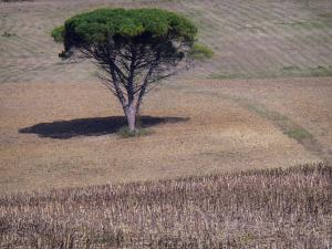 Landscapes of the Lot-et-Garonne - Tree in a field