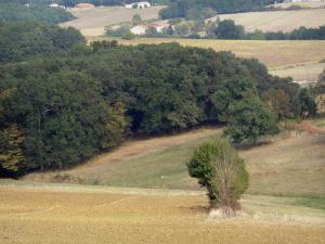 Landscapes of the Lot-et-Garonne - Fields and woods