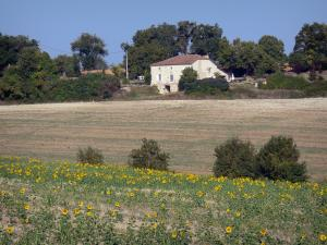 Landscapes of the Lot-et-Garonne - Blooming sunflowers, field, house and trees