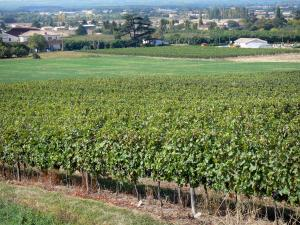 Landscapes of the Lot-et-Garonne - Vines in the foreground overlooking the plains dotted with houses, fields and trees