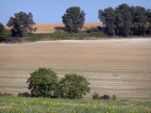 Landscapes of the Lot-et-Garonne - Blooming sunflowers, fields and trees