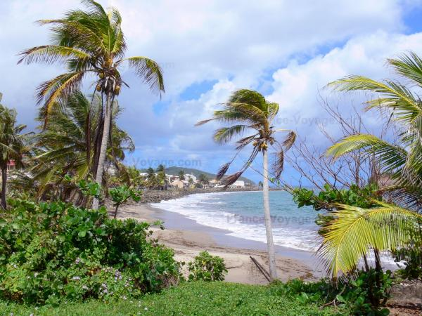 Landscapes of Martinique - Overlooking the waterfront of St. Mary and the Atlantic Ocean, with coconut trees in the foreground