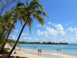 Landscapes of Martinique - Beach of Grande Anse des Salines with its coconut palms, fine sand and turquoise sea; in the municipality of Sainte-Anne