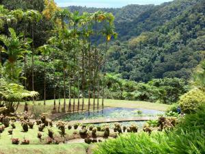 Landscapes of Martinique - Balata garden with a pond royal palm trees in a green