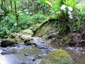 Landscapes of Martinique - Regional Park of Martinique: River in the heart of the rainforest
