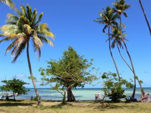Landscapes of Martinique - Beach tip Faula decorated with trees and coconut palms, overlooking the lagoon and white backgrounds; in the town of Vauclin