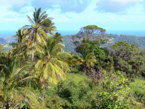 Landscapes of Martinique - Tropical vegetation