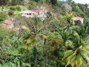 Landscapes of Martinique - Houses in lush nature