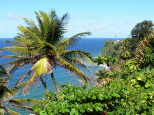 Landscapes of Martinique - Green cliff Macouba with coconut trees in the foreground, overlooking the Atlantic Ocean