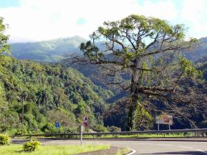 Landscapes of Martinique - Sloping tree-lined road leading to Grand'Rivière