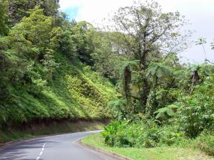 Landscapes of Martinique - Regional Park of Martinique: Trace route through the rainforest