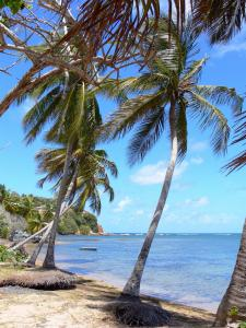 Landscapes of Martinique - Caravelle peninsula in Tartane coconut trees at the edge of the Atlantic Ocean, overlooking the tip Bibi