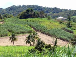 Landscapes of Martinique - Coconut and sugar cane fields