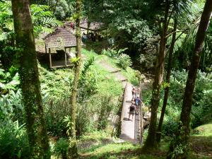 Landscapes of Martinique - Regional Park of Martinique: gateway to the heart of the rainforest leading to the waterfall of Saut-Gendarme