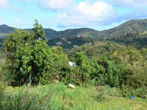 Landscapes of Martinique - Small green hills dotted with houses