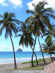 Landscapes of Martinique - Diamond beach lined with coconut trees, with views of the Diamond Rock and the Caribbean Sea