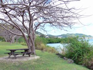 Landscapes of Martinique - Picnic table at the foot of a tree overlooking the Cul-de-Sac Marin