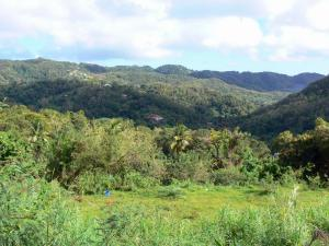 Landscapes of Martinique - Small green hills