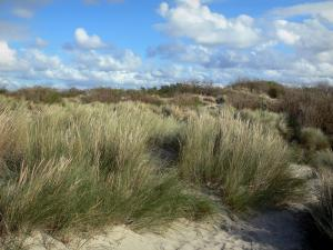 Landscapes of the Nord - Opal Coast: dune with beachgrass (psammophytes), clouds in the blue sky