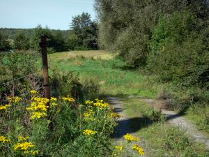 Landscapes of the Nord - Avesnois Regional Nature Park: wild flowers, road and trees