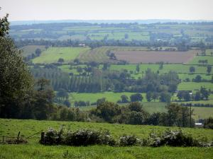Landscapes of Normandy - Of Mont-Robin, view of trees, prairies and surrounding fields