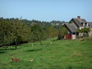 Landscapes of Normandy - House and apple trees (fruit trees) in a prairie