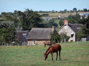 Landscapes of Normandy - Horses in a meadow, houses and trees