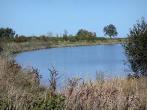 Landscapes of Normandy - Cotentin and Bessin marshes Regional Nature Park: lake lined with vegetation, high vegetation and ears