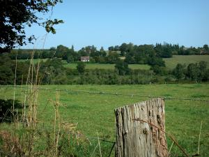 Landscapes of Normandy - Ears and fence of a prairie in foreground, fields and trees