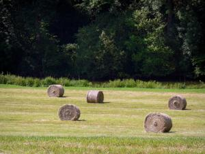Landscapes of the Orne - Bales of hay in a field at the edge of a forest
