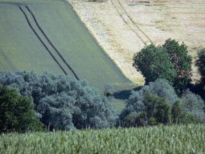 Landscapes of the Orne - Trees surrounded by fields