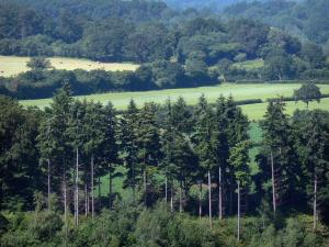 Landscapes of the Orne - Trees, fields and forest