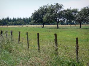 Landscapes of the Orne - Trees in the middle of a meadow and fence in foreground