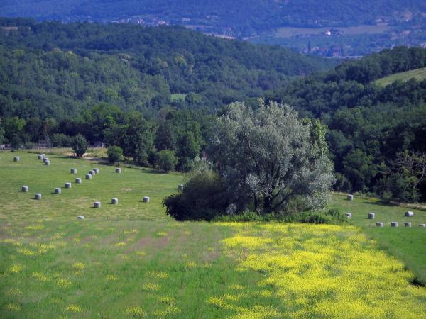 Landscapes of Périgord - Meadow dotted with wild flowers, trees, field with bales of straw and forest