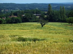 Landscapes of Périgord - Wheat field, trees, houses and forest