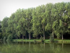 Landscapes of Picardy - Pond lined with trees in Péronne
