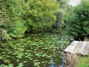 Landscapes of Picardy - Pond dotted with water lilies and lined with trees