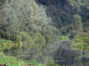 Landscapes of Picardy - Pond of upper Somme, vegetation and trees
