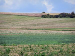 Landscapes of Picardy - Fields