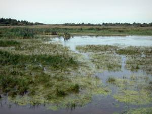 Landscapes of Picardy - Nature reserve of the Bay of Somme: marshes, reeds